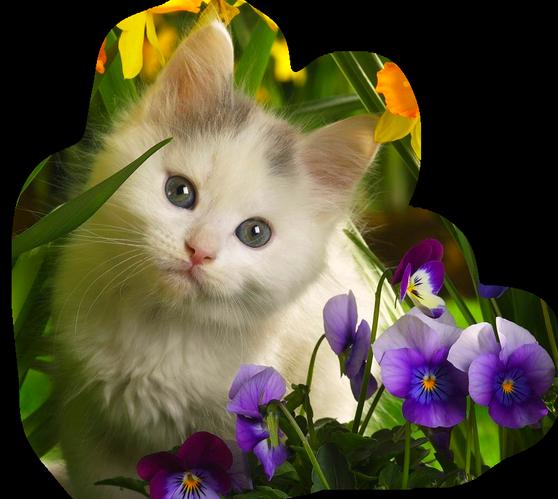 http://img-fotki.yandex.ru/get/6208/39663434.104/0_716ba_a5aa260e_XL.jpg