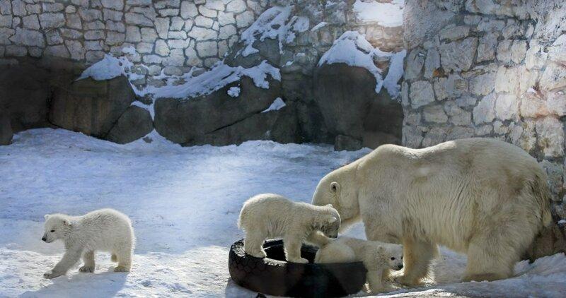 """...Вот он настоящий """"материнский капитал""""...!!...Московский зоопарк."""