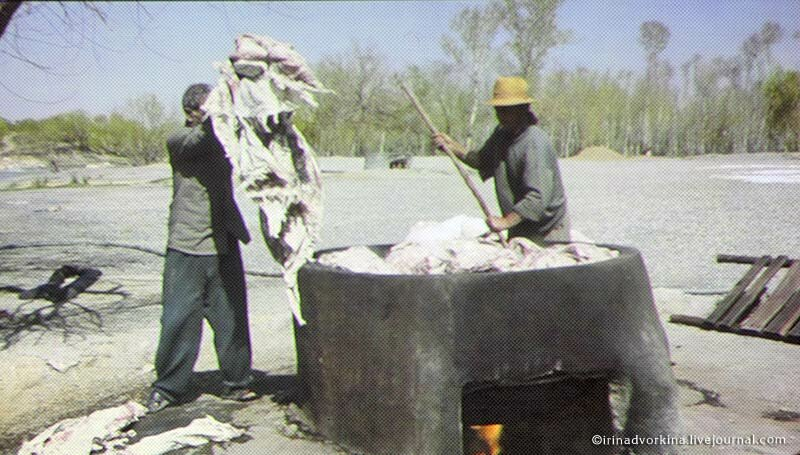 Иранский каламкар