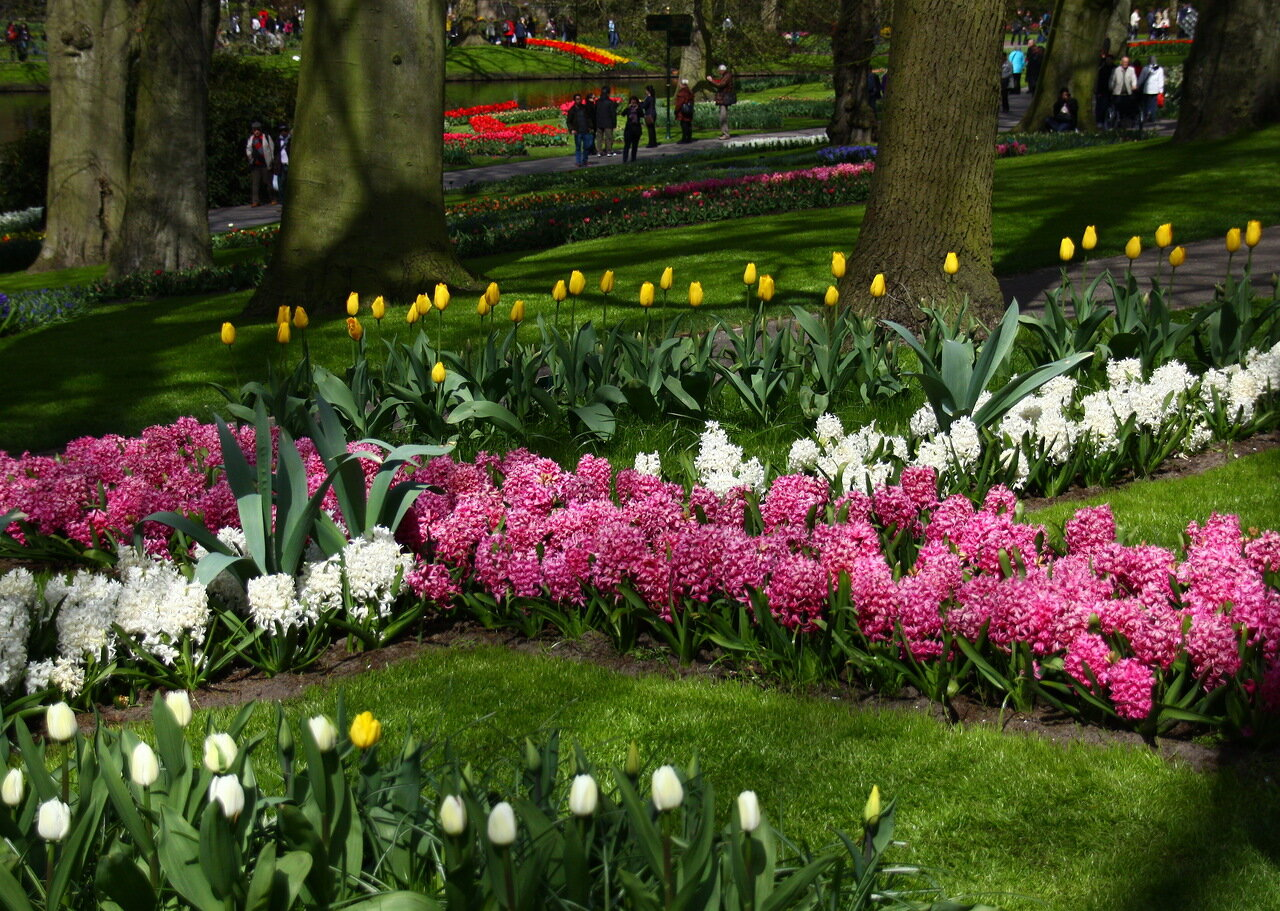 Клумба из тюльпанов своими руками на даче фото 32
