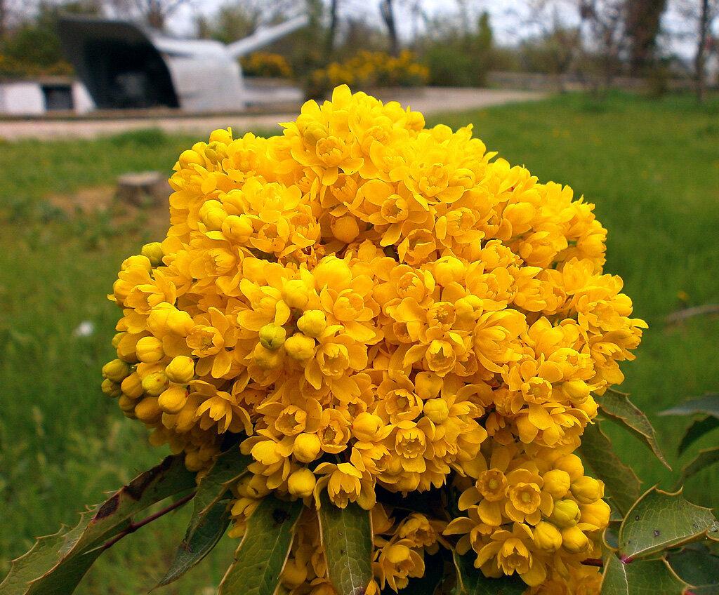В плену жёлтого цвета