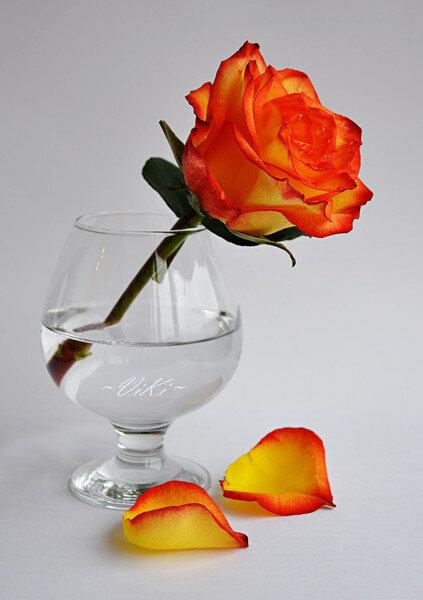 """Оригинал схемы вышивки  """"роза в бокале """" ."""