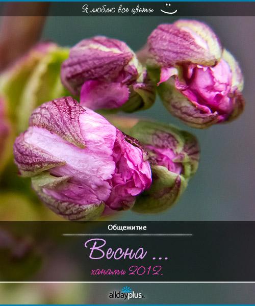 Я люблю все цветы, часть 7
