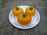 Помидор, томат сорт Азоюшка (Azoychka)