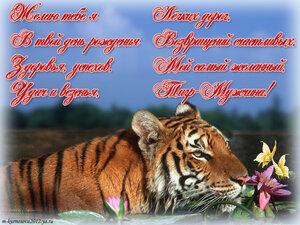 Открытка ты мой тигр 79