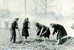 Работники исполкома райсовета на субботнике в городском саду, 1964 год. Фото из архива Ф.И.Тепленковой.jpg