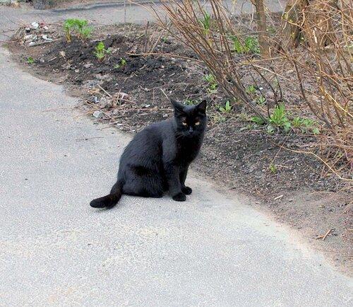Грозный черный кот