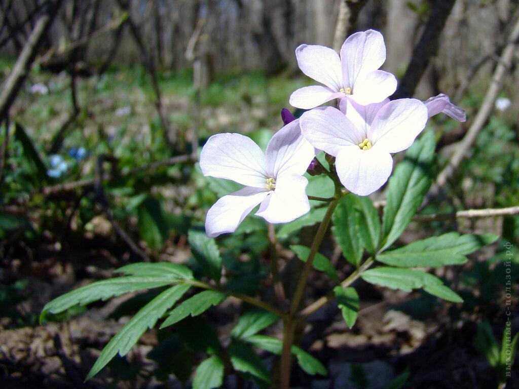 Макросъемка в лесу, цветок
