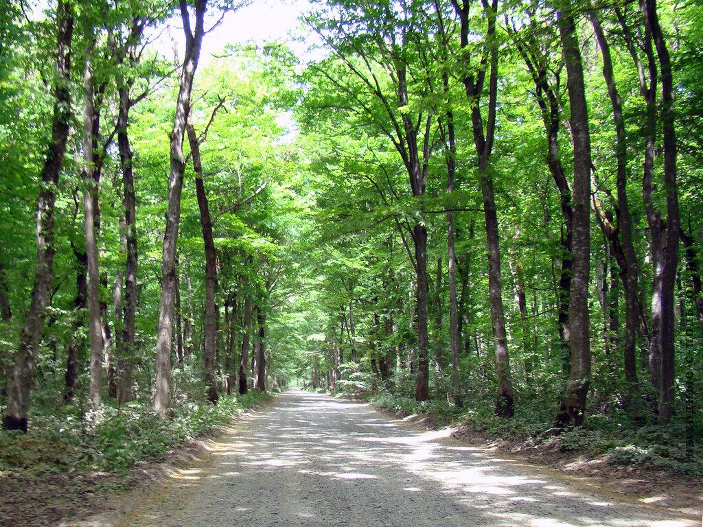 Дорога через лес на