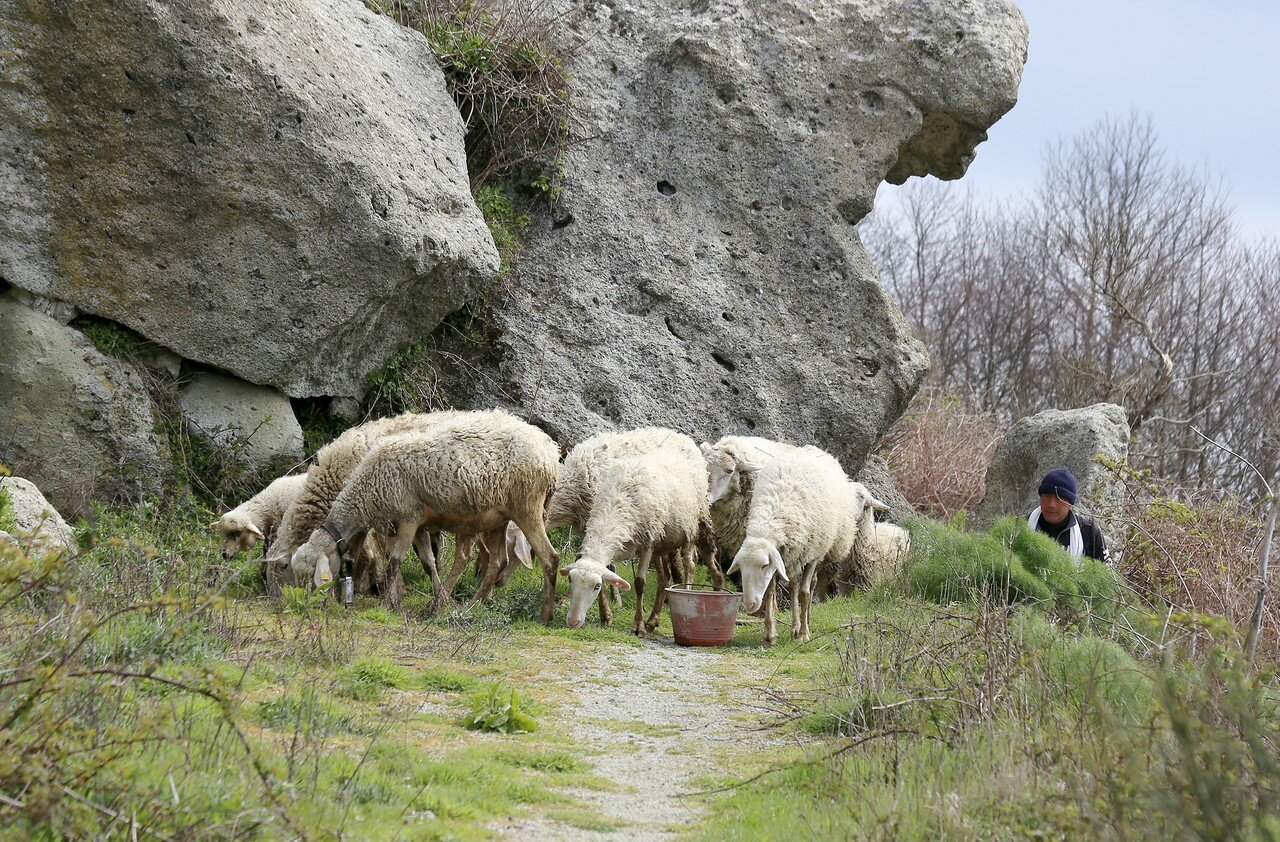 Ischia, mount Epomeo. Mountain shepherd.