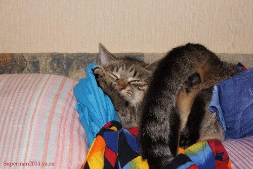 Вот так вот я сплю, и мне так удобно...