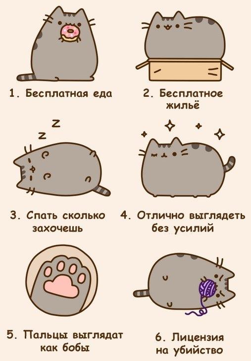 Я хотел бы быть как кот картинка