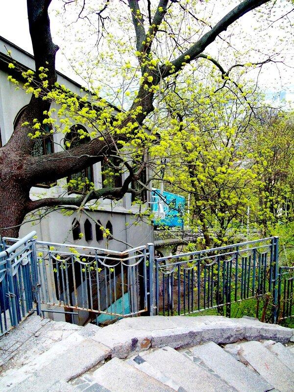Цветущее дерево на владимирской горке