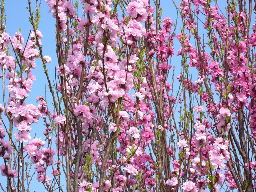 Пришла весна, пора цветения,