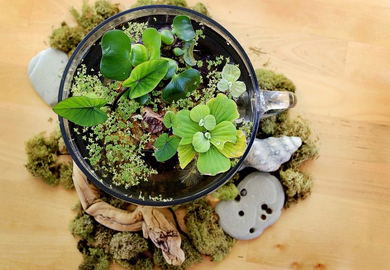 Для того, чтобы сделать свой собственный.  Миниатюрный сад. и что очень важно, не займет много места...