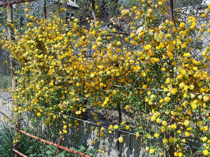 Крым,весна,Алупка,Людочкин сад,керия