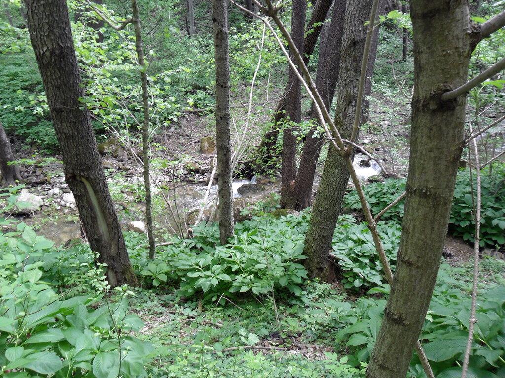В лесу весеннем, у ручья ... SAM_7711.jpg