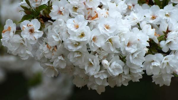 шикарные цветы картинки: