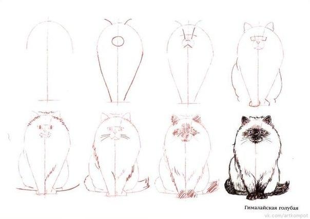 для детей - кошки/ Несколько интересных уроков рисования. очсвойте хотя бы несколько уроков и Вы удивите своих друзей...