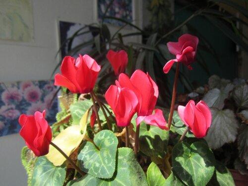 Цветок форум