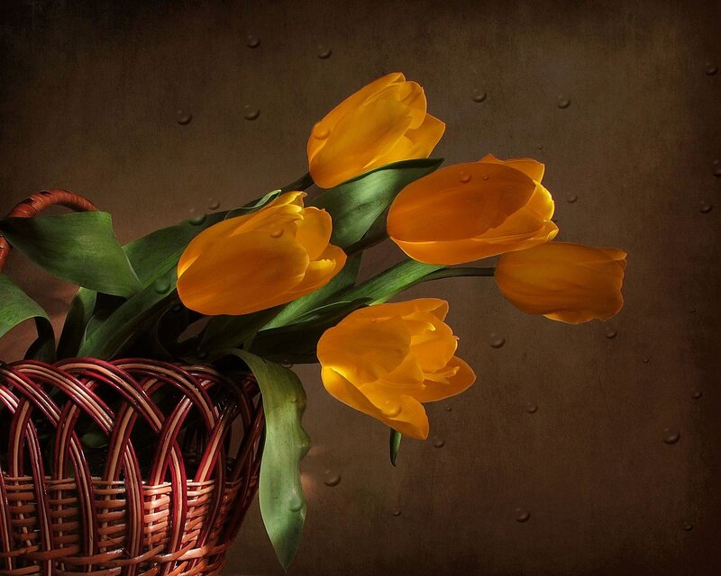 Свтящиеся тюльпаны