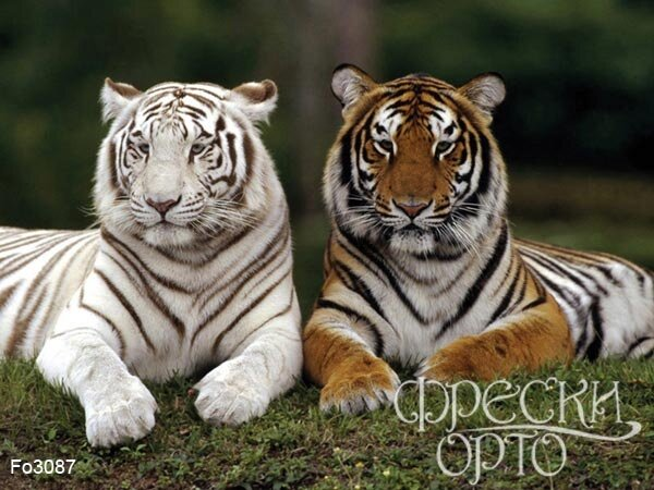 """Предпросмотр - Схема вышивки  """"Два тигра """" - Схемы вышивки - Mari13 - Авторы - Портал  """"Вышивка крестом """" ."""