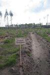 лесопосадки Шатура дуб Агаджановой_2.jpg