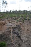 лесопосадки Шатура дуб помощь больным муковисцидозом.jpg