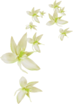 MRD_RT_falling cream flowers.png