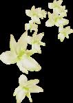MRD_RT_falling cream flowers.png