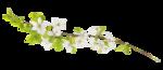 «La_magie_des_fleurs» 0_86276_93ab5d3b_S