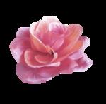 «Oh_Rose»  0_87868_cea0d10e_S