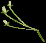 «whitebell flowers»  0_879b6_560eed18_S