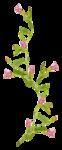 «whitebell flowers»  0_879d2_5cae331d_S