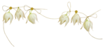 «whitebell flowers»  0_879d4_f932e1_S