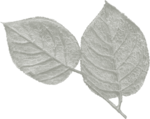 jss_oohhlala_rose leaves 2 gray light.png