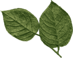 jss_oohhlala_rose leaves 2 green.png