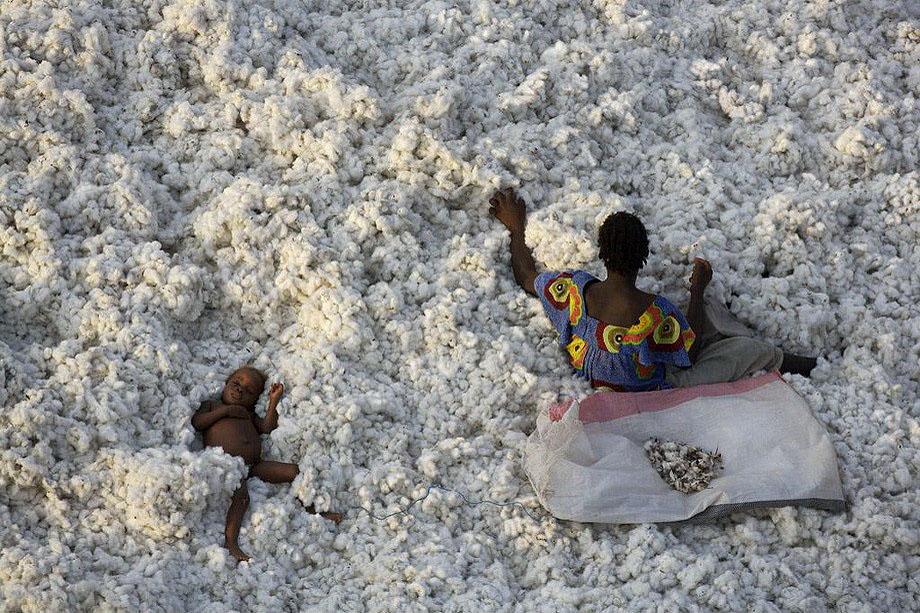 42. На уборке хлопка в Буркина-Фасо .