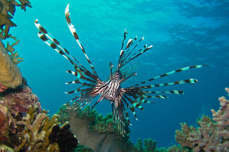 прочные, подводные обитатели хорватии список и фото ягод можно использовать