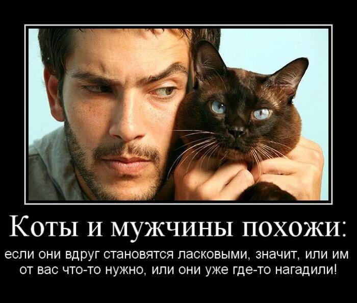 Фото мужика с котом