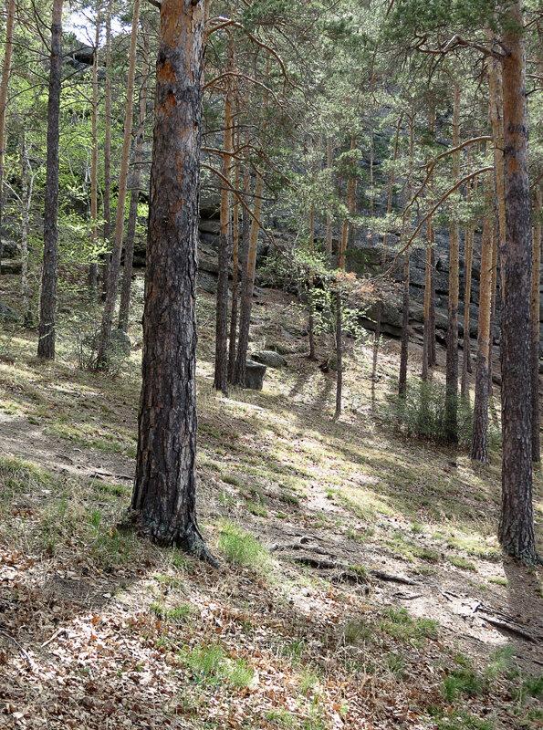 Боровое, придорожные скалы и сосны - 2012 год. Комментарии к фото - Кокшетау Онлайн