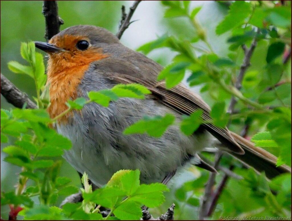 картинки птиц нашего леса конце концов