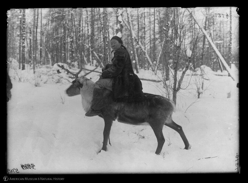 Ламуты. Женщина на олене. Марково. 1901