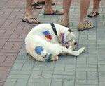 Крым июнь 2014