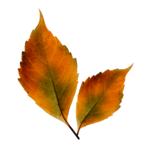 WPD Enchanted Autumn el.84.png
