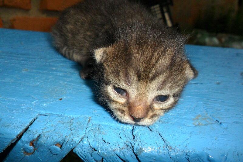 фото котенка который только открыл глаза