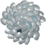 feli_syd_flower of shells.png