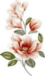ddmagnoliaflower.png