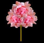 «Oh_Rose»  0_87875_89c2d560_S