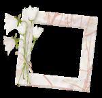 «whitebell flowers»  0_879d1_c91fd6c1_S